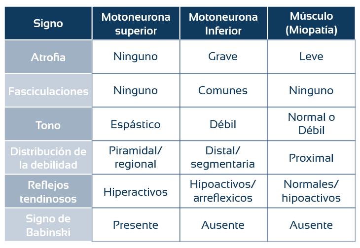tipos de neuronas motoras